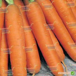 Балтимор F1 семена моркови Берликум PR (1,6-1,8 мм) (Bejo)