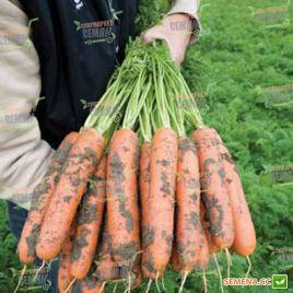 Балтимор F1 семена моркови Берликум PR (1,8-2,0 мм) (Bejo)
