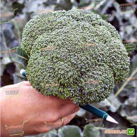 Батавия F1 семена капусты брокколи ранней 65дн 1-1,2кг (Bejo)