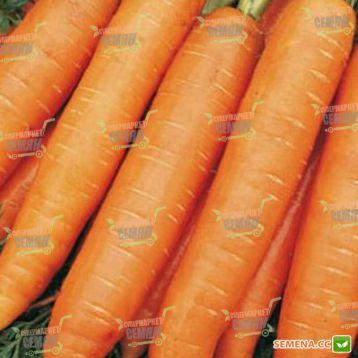 Берлин F1 семена моркови Берликум PR (1,8-2,0 мм) (Bejo)