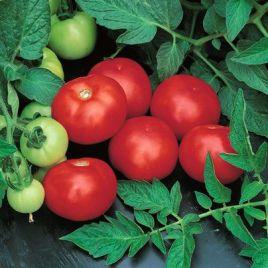 Топкапи F1 семена томата дет. (Vilmorin)