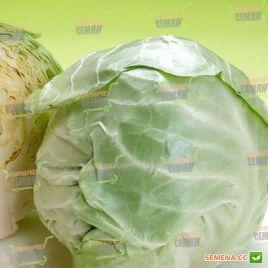 Бронко F1 семена капусты б/к среднеранней 80 дн. 2,5-3кг (Bejo)