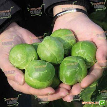 Франклнн F1 семена капусты брюссельской (Bejo)