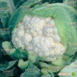 Гудмен семена капусты цветной (Bejo)