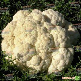 Гудмен семена капусты цветной ранней 75 дн 1,2-1,5 кг бел. (Bejo)