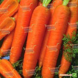 Канада F1 семена моркови Шантане (1,8-2,0 мм) PR поздней 120-135 дн. (Bejo)