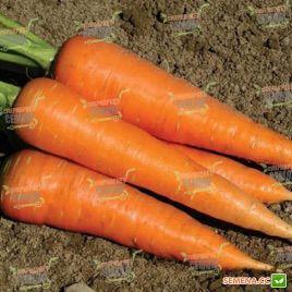 Кардиф F1 семена моркови Шантане PR (1,8-2,0 мм) (Bejo)