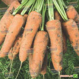 Кардиф F1 (2,0-2,2мм) семена моркови Шантане ранней 100 дн. (Bejo)