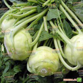 Корист F1 семена капусты кольраби ранней 65 дн. 0,3-0,4кг (Bejo)