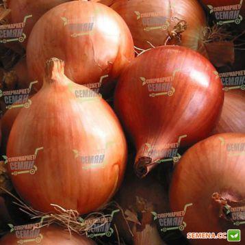Леон семена лука репчатого среднего 120 дн. (Bejo)