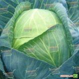 Леннокс F1 семена капусты б/к поздней 140 дн. 2,5-4,5 кг окр. (Bejo)