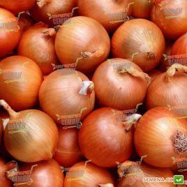 Манас F1 (Normal) семена лука репчатого среднего 110-115дн (Bejo)