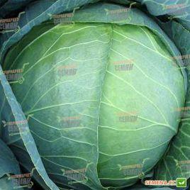 Мегатон F1 семена капусты б/к средней (Bejo)