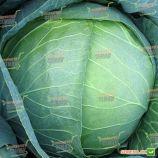 Мегатон F1 семена капусты б/к средней 102 дн. 4-8кг (15кг) окр.-прип. (Bejo)