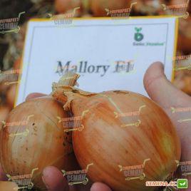 Мелори F1 (Normal) семена лука репчатого среднего 114дн (Bejo)