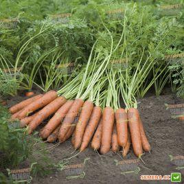 Наполи F1 семена моркови Нантес (1,6-1,8 мм) PR (Bejo)