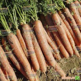 Нарбонне F1 (1,6-1,8мм) семена моркови Нантес поздней 135 дн. (Bejo)