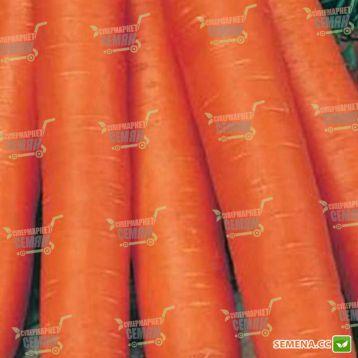 Навал F1 семена моркови Нантес (1,8-2,0 мм) (Bejo)