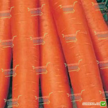 Навал F1 семена моркови Нантес (2,0-2,2 мм) (Bejo)