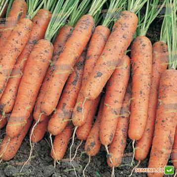 Ниагара F1 семена моркови Нантес / Берликум (2,2 - 2,4 мм) (Bejo)