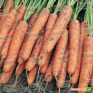 Ниагара F1 семена моркови Нантес / Берликум (1,6 - 1,8 мм) (Bejo)