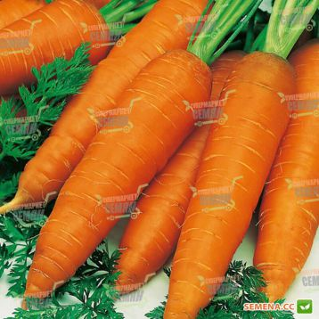 Ниланд F1 семена моркови Нантес (1,6 - 1,8 мм) (Bejo)