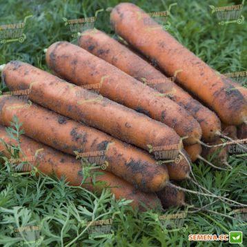 Номинатор F1 семена моркови Нантес (2,0-2,2 мм) (Bejo)
