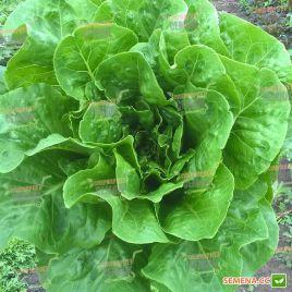 Бацио семена салата тип Ромэн зел. (Enza Zaden)