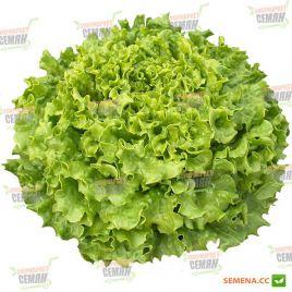 Кайпира семена салата тип Батавия зел. (Enza Zaden)