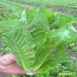 Корбана Organic семена салата тип Ромэн (Enza Zaden/Vitalis)