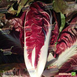 Гиове F1 семена салата тип Тревизо 80-90дн. красн. (Enza Zaden)