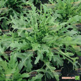 Грация Organic семена рукколы зел. (Enza Zaden/Vitalis)