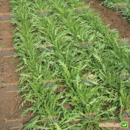Триция семена рукколы зел. (Enza Zaden)