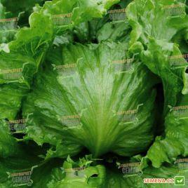 Дизайн семена салата тип Айсберг зел. (Enza Zaden)