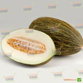 Джабалон F1 семена дыни тип Пиел де Сапо средней 85-90 дн. 3,5-4 кг овал. зел./бел. (Enza Zaden)