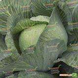 Парадокс F1 семена капусты б/к поздней 141 дн. 3-4 кг окр. (Bejo)