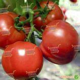 Полфаст F1 семена томат дет.раннего 85 дн. окр.-припл. 100-150 гр. красный (Bejo)