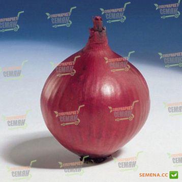 Ред Барон семена лука репчатого красного среднего 110 дн. (Bejo)
