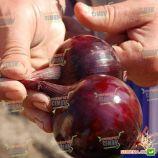 Робин семена лука репчатого красного среднего 108-115 дн. (Bejo)