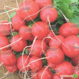 Ролекс F1 (2,50-2,75мм) семена редиса 25-30 дн. (Bejo)