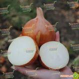 Седона F1 семена лука репчатого среднего 110-116 дн. желтого (Bejo)