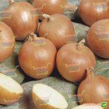 Тамара F1 семена лука репчатого среднего дня среднего 105-108 дн. желтого (Bejo)
