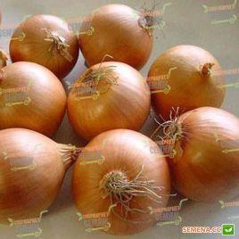Тамара F1 семена лука репчатого среднего 105-108 дн полудлинн. дня (Bejo)