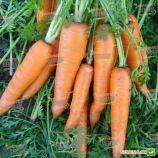 Вита Лонга семена моркови Флакке (Bejo)