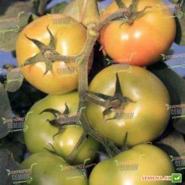 Афамия F1 семена томата индет (Enza Zaden)