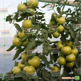 Афамия F1 семена томата индет. раннего 85-100 дн. окр. 160-180г (Enza Zaden)