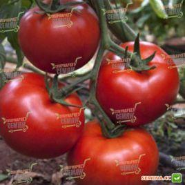 Аманета F1 семена томата индет. раннего окр. 180-220г (Enza Zaden) НЕТ ТОВАРА