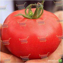 Аманета F1 семена томата индет (Enza Zaden)