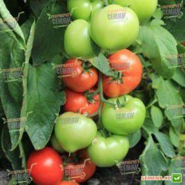 Беллфорт F1 (Е27.34680) семена томата индет. раннего 90-100 дн. окр. 250-300г (Enza Zaden)