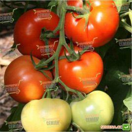 Берберана F1 семена томата индет (Enza Zaden)